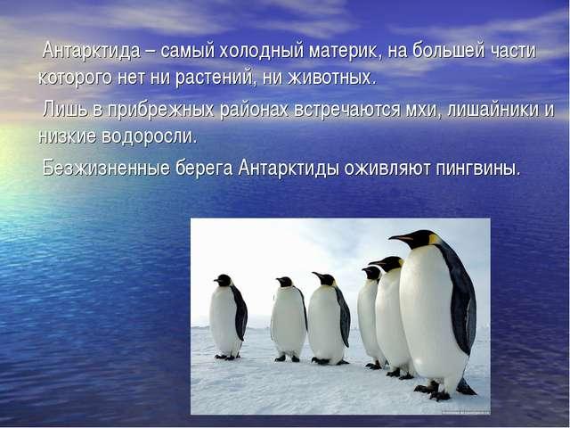 Антарктида – самый холодный материк, на большей части которого нет ни растен...