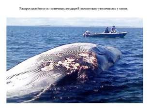 Распространённость солнечных волдырей значительно увеличилась у китов.