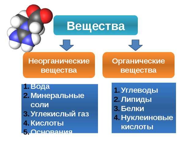 Вещества Неорганические вещества Органические вещества Вода Минеральные соли...