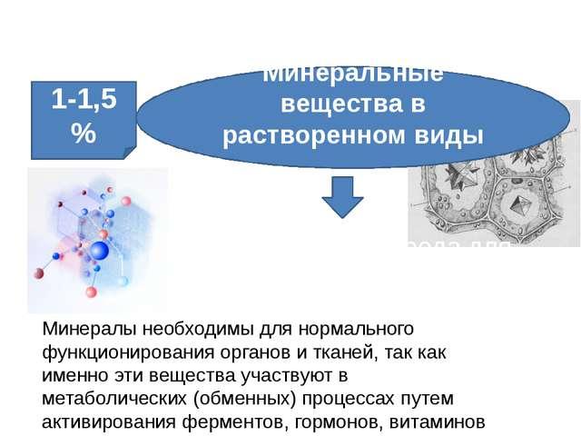 Неорганические вещества клетки Необходимая среда для химических процессов Мин...