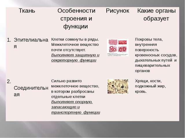 Ткань Особенностистроения и функции Рисунок Какие органы образует Эпителиаль...
