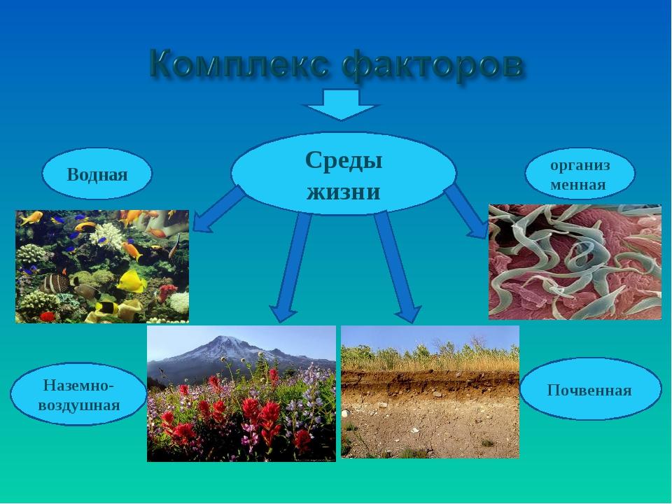 Среды жизни Водная Наземно-воздушная Почвенная организменная