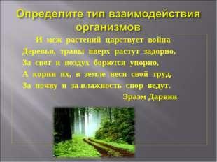 И меж растений царствует война Деревья, травы вверх растут задорно, За свет
