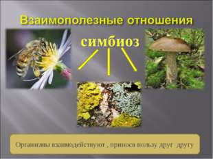 Организмы взаимодействуют , принося пользу друг другу