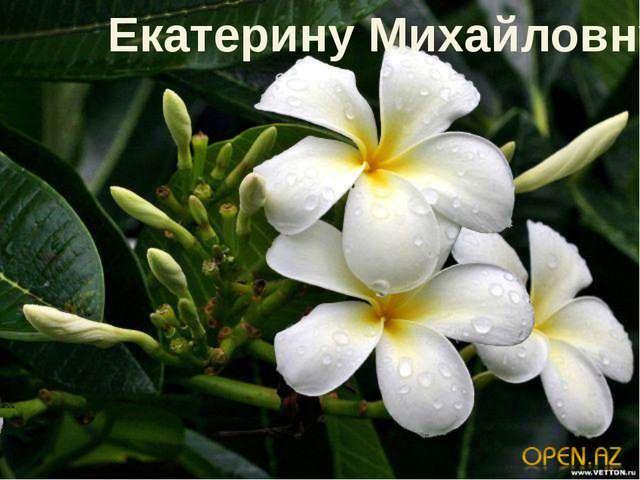 Екатерину Михайловну