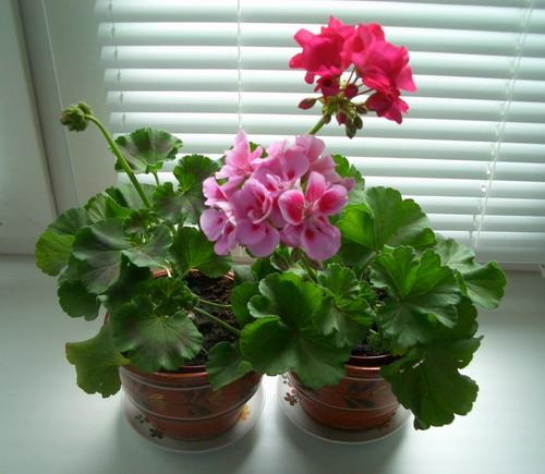 http://flowersclub.info/_ph/1/2/260044996.jpg