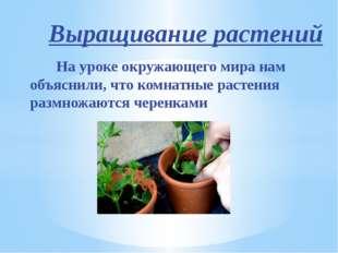 Выращивание растений На уроке окружающего мира нам объяснили, что комнатные р