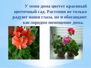У меня дома цветет красивый цветочный сад. Растения не только радуют наши гл