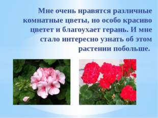 Мне очень нравятся различные комнатные цветы, но особо красиво цветет и благ
