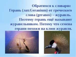 Обратимся к словарю: Герань (лат.Geranium) от греческого слова (geranos) – ж
