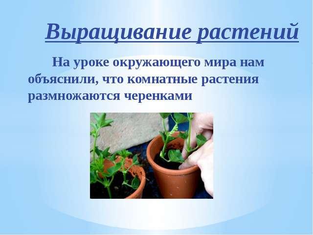 Выращивание растений На уроке окружающего мира нам объяснили, что комнатные р...