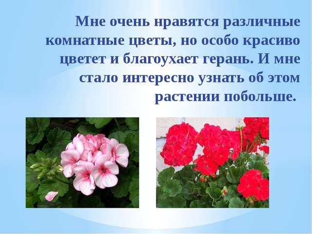 Мне очень нравятся различные комнатные цветы, но особо красиво цветет и благ...