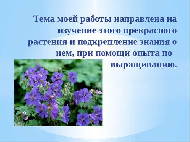 Тема моей работы направлена на изучение этого прекрасного растения и подкреп...