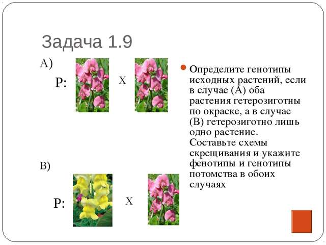 Задача 1.9 Определите генотипы исходных растений, если в случае (А) оба расте...
