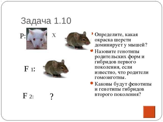 Задача 1.10 Определите, какая окраска шерсти доминирует у мышей? Назовите ген...
