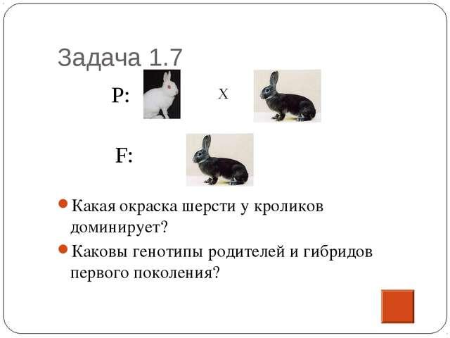 Задача 1.7 Какая окраска шерсти у кроликов доминирует? Каковы генотипы родите...