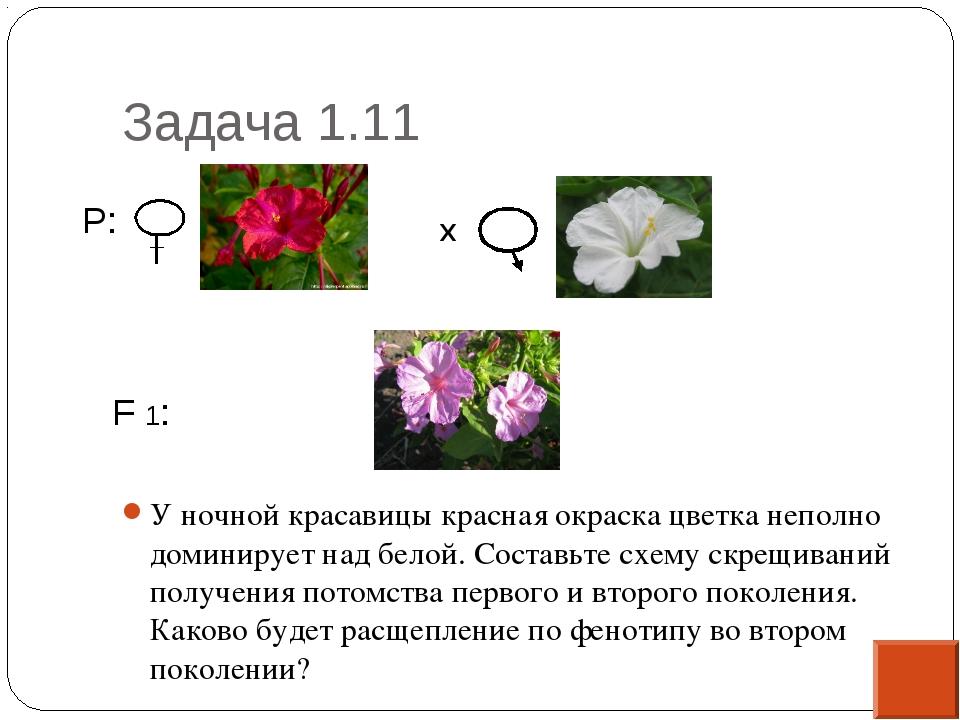 Задача 1.11 У ночной красавицы красная окраска цветка неполно доминирует над...