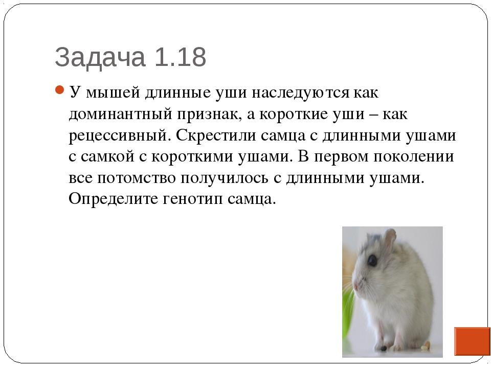 Задача 1.18 * У мышей длинные уши наследуются как доминантный признак, а коро...