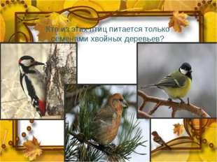 Кто из этих птиц питается только семенами хвойных деревьев?