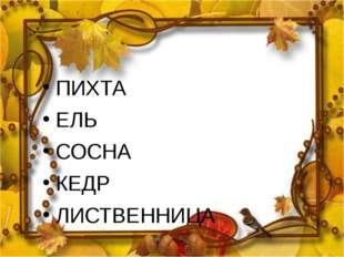ПИХТА ЕЛЬ СОСНА КЕДР ЛИСТВЕННИЦА