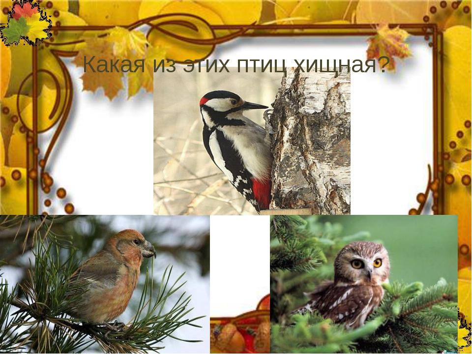 Какая из этих птиц хищная?