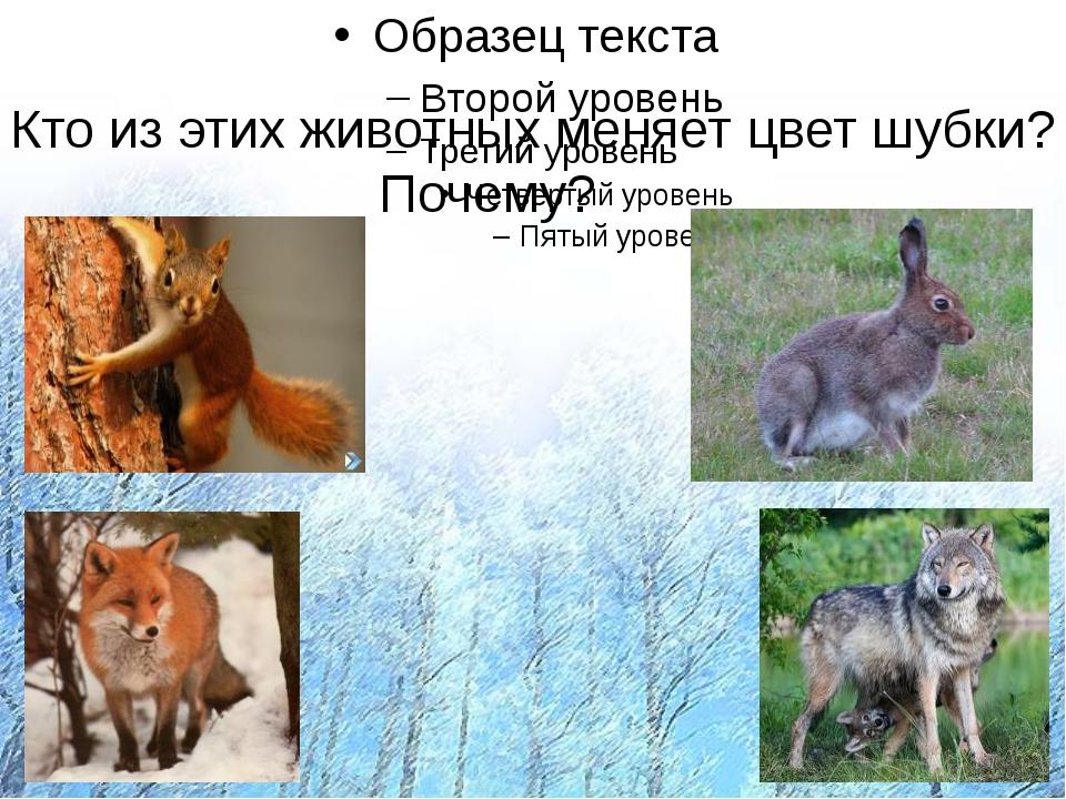 Кто из этих животных меняет на зиму цвет шубки? Почему? Кто из этих животных...