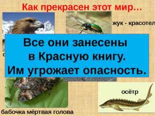 орёл - беркут бабочка мёртвая голова жук - красотел скопа осётр Как прекрасен