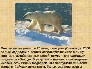 Совсем не так давно, в 20 веке, ежегодно убивали до 2000 белых медведей. Чело