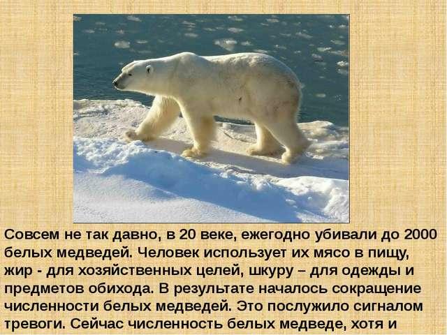 Совсем не так давно, в 20 веке, ежегодно убивали до 2000 белых медведей. Чело...