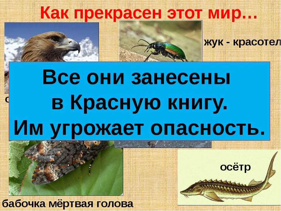 орёл - беркут бабочка мёртвая голова жук - красотел скопа осётр Как прекрасен...