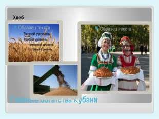Главные богатства Кубани Хлеб