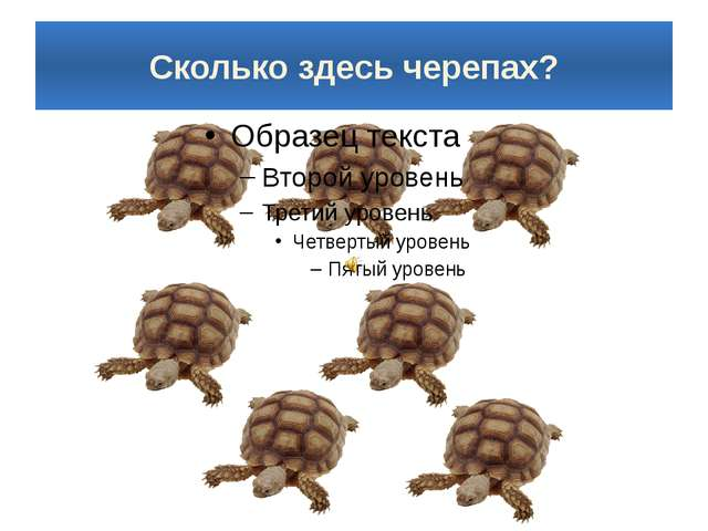 Сколько здесь черепах?
