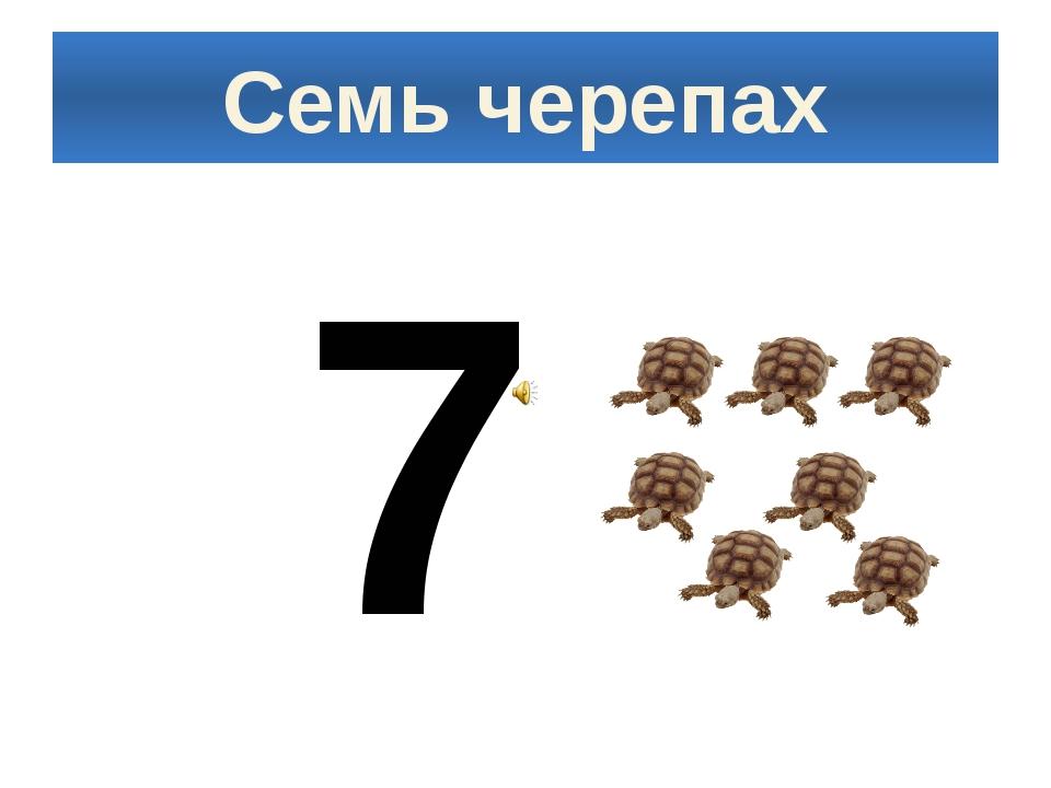 Семь черепах 7