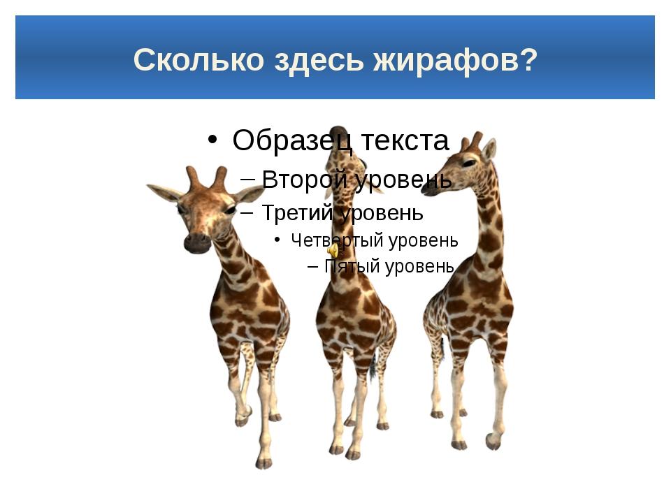 Сколько здесь жирафов?