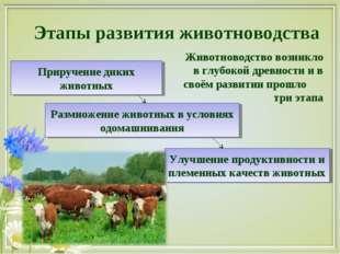 Этапы развития животноводства Приручение диких животных Улучшение продуктивно