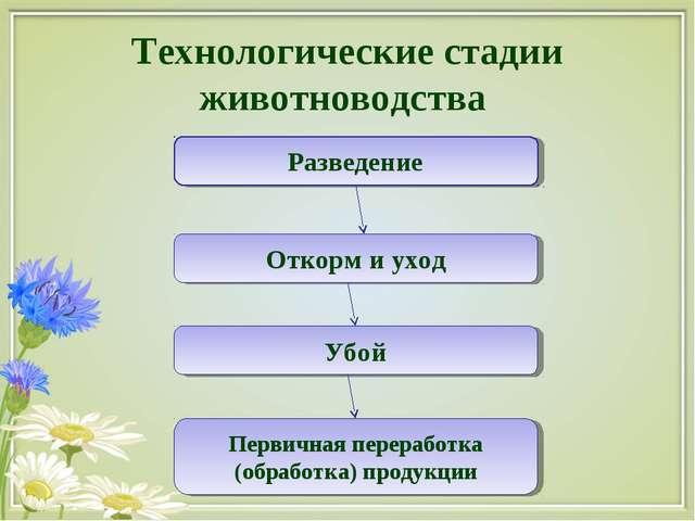 Технологические стадии животноводства Разведение Откорм и уход Убой Первичная...