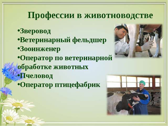 Профессии в животноводстве Зверовод Ветеринарный фельдшер Зооинженер Оператор...