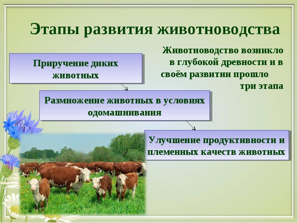 Этапы развития животноводства Приручение диких животных Улучшение продуктивно...