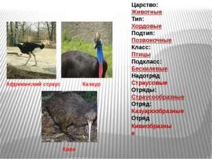Царство: Животные Тип: Хордовые Подтип: Позвоночные Класс: Птицы Подкла
