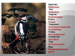 Царство: Животные Тип: Хордовые Подтип: Позвоночные Класс: Птицы Подкл