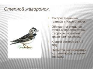 Степной жаворонок. Распространен на границе с Казахстаном. Обитает на открыты