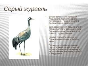 Серый журавль Встречается на территории Аткарского, Самойловского, Петровског