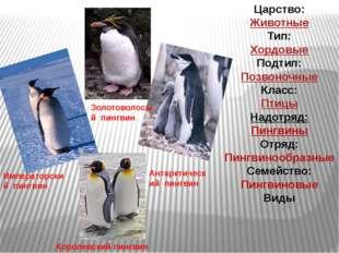 Королевский пингвин Императорский пингвин Золотоволосый пингвин Антарктически