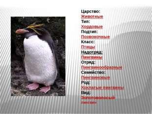 Царство: Животные Тип: Хордовые Подтип: Позвоночные Класс: Птицы Надотряд: Пи