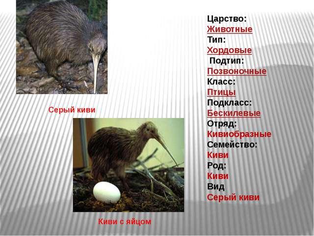 Царство: Животные Тип: Хордовые Подтип: Позвоночные Класс: Птицы Подкла...