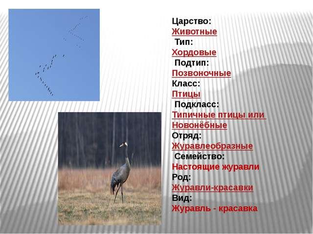 Царство: Животные Тип: Хордовые Подтип: Позвоночные Класс: Птицы Подкл...