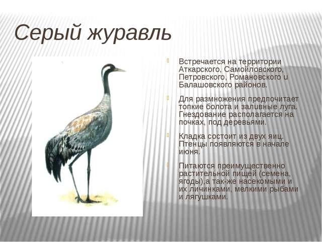 Серый журавль Встречается на территории Аткарского, Самойловского, Петровског...