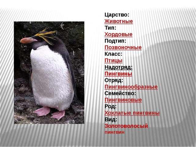 Царство: Животные Тип: Хордовые Подтип: Позвоночные Класс: Птицы Надотряд: Пи...