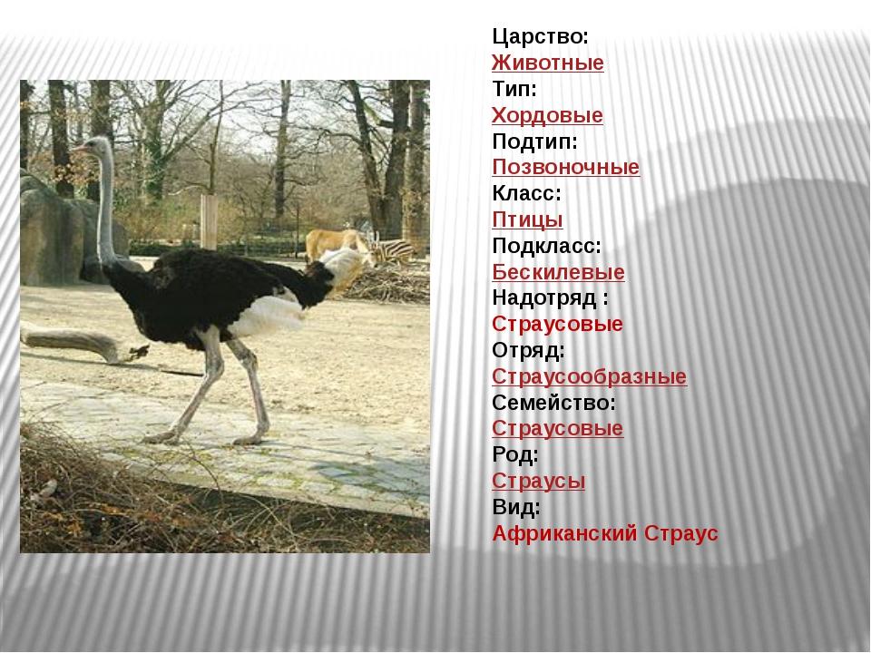 Царство: Животные Тип: Хордовые Подтип: Позвоночные Класс: Птицы Подклас...