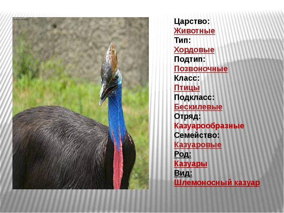 Царство: Животные Тип: Хордовые Подтип: Позвоночные Класс: Птицы Подкласс: Бе...
